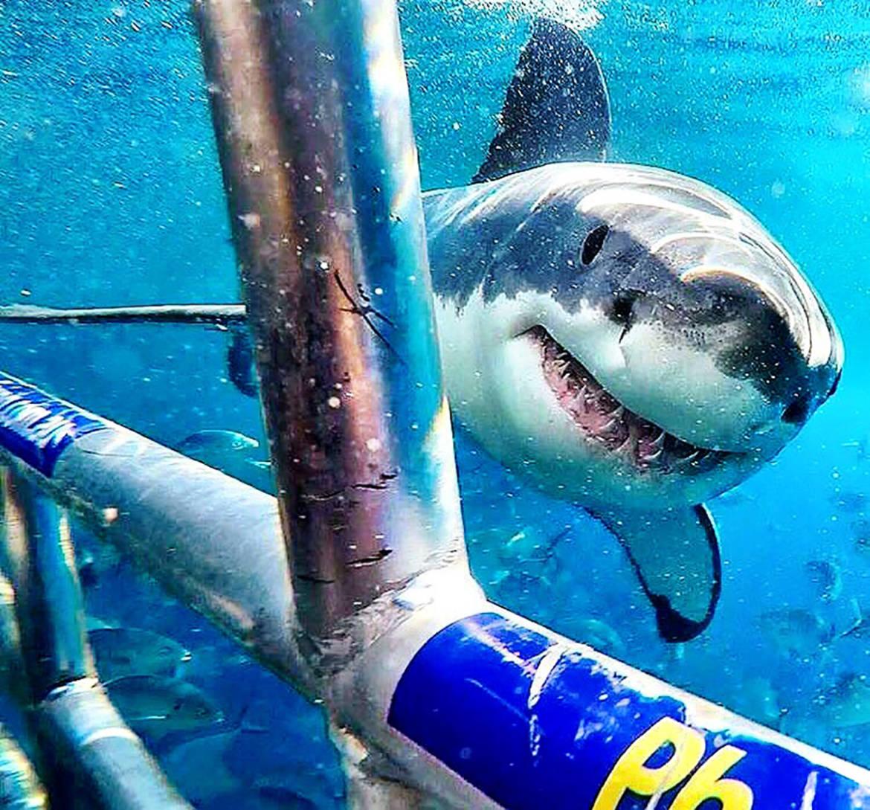 En-Gansbaai-Tiburones-2016.jpg